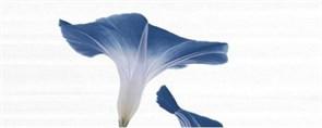Décor Alin Royal Blue A 20x50 S-64
