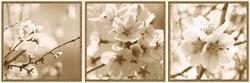 Декор Ibero Dec. Bloom A S-89, 25x75 - фото 6096